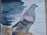 The Abandoned Pigeon